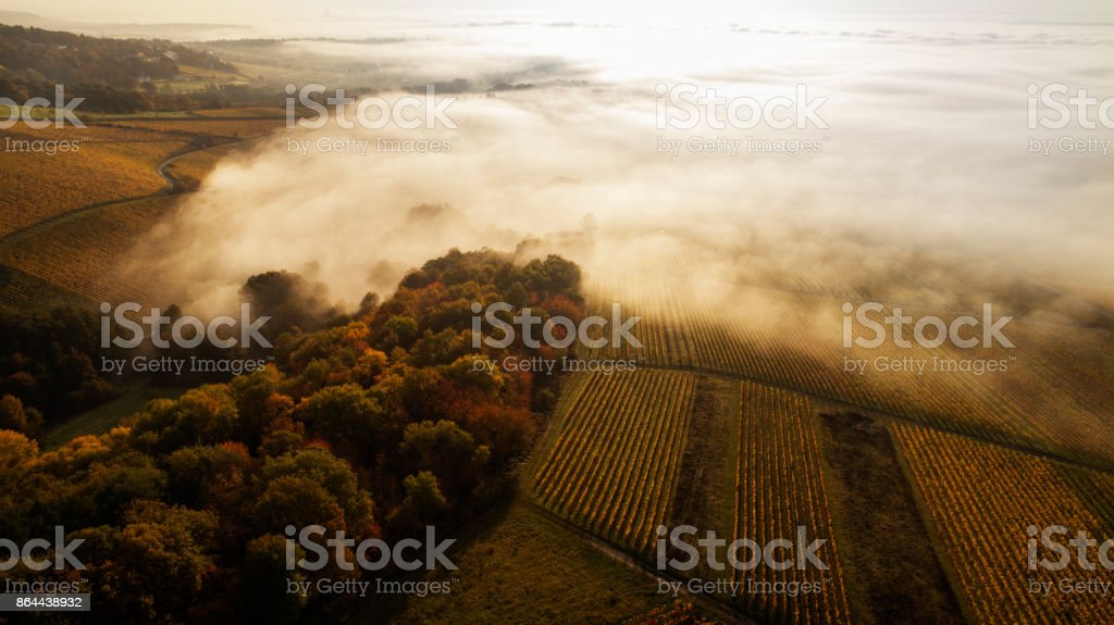 Vineyards and fog in the morning stock photo