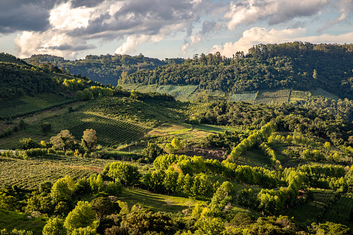 Vineyards and forest in valley , Bento Goncalves, Rio Grande do Sul, Brazil