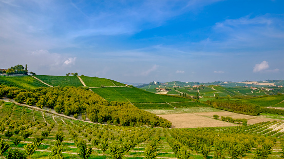 948424058 istock photo Vineyards and hazel trees in the Langhe hilly area, province of Cuneo, Piedmont, Italy 948426544