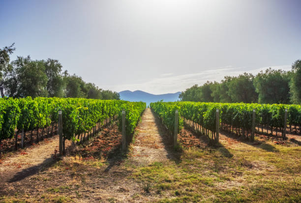 vineyards and landscape in tuscany. Italy stock photo