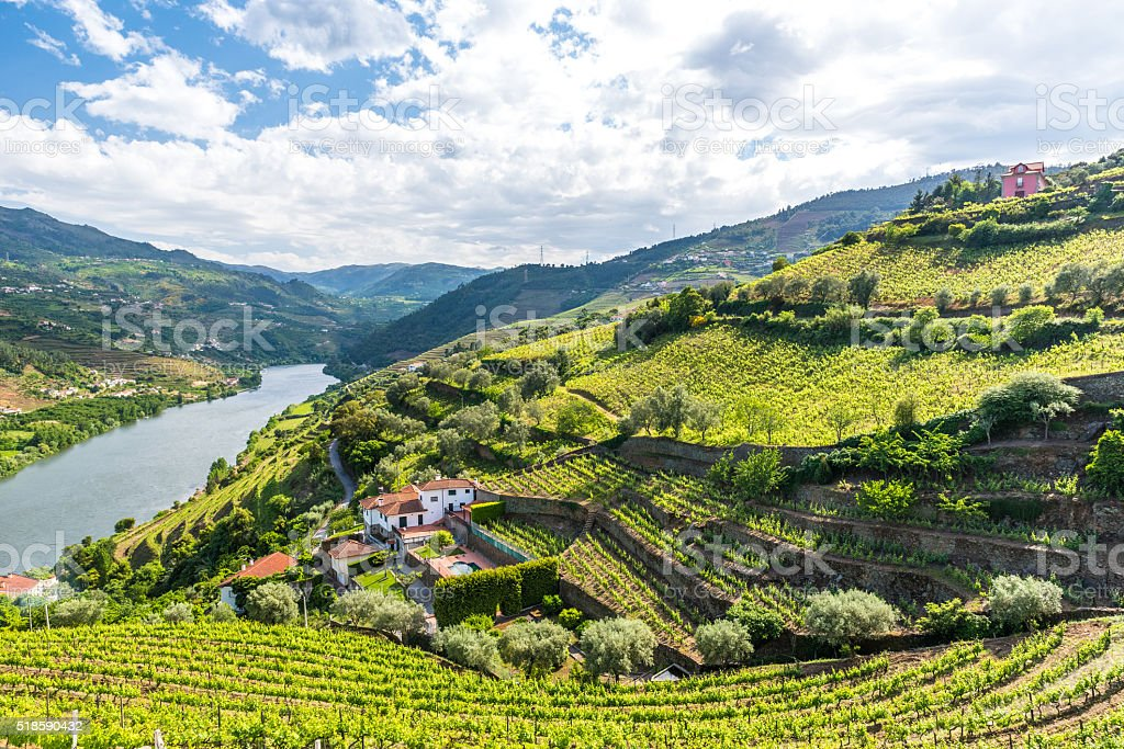 weinberge und landschaft des douro fluss gebiet in portugal stock fotografie und mehr bilder von. Black Bedroom Furniture Sets. Home Design Ideas