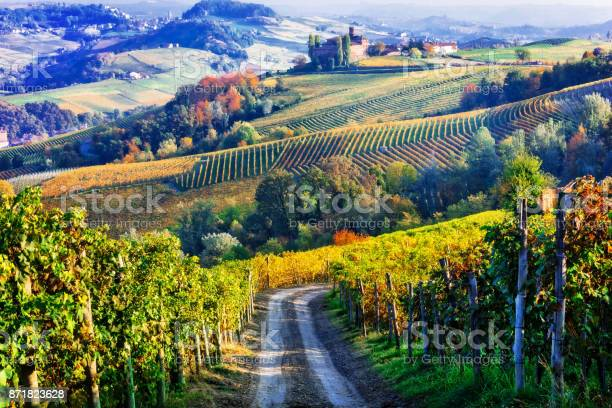 Vineyards and of piemonte in autumn colors north of italy picture id871823628?b=1&k=6&m=871823628&s=612x612&h=jmyeyvt2bhtwwy ft4hwhemj7qtguh8rpp6goqsvhnu=