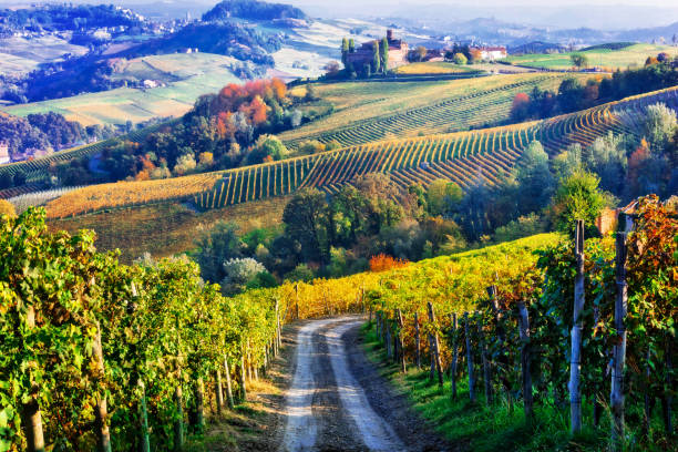 vineyards and of piemonte in autumn colors. north of italy - italy stock photos and pictures