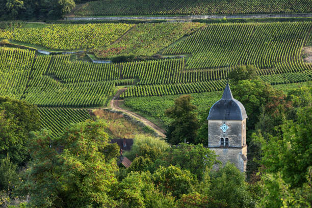 Vineyards and Old Church/Clock Tower of The Village of Chambolle-Musigny, Burgundy, France stock photo