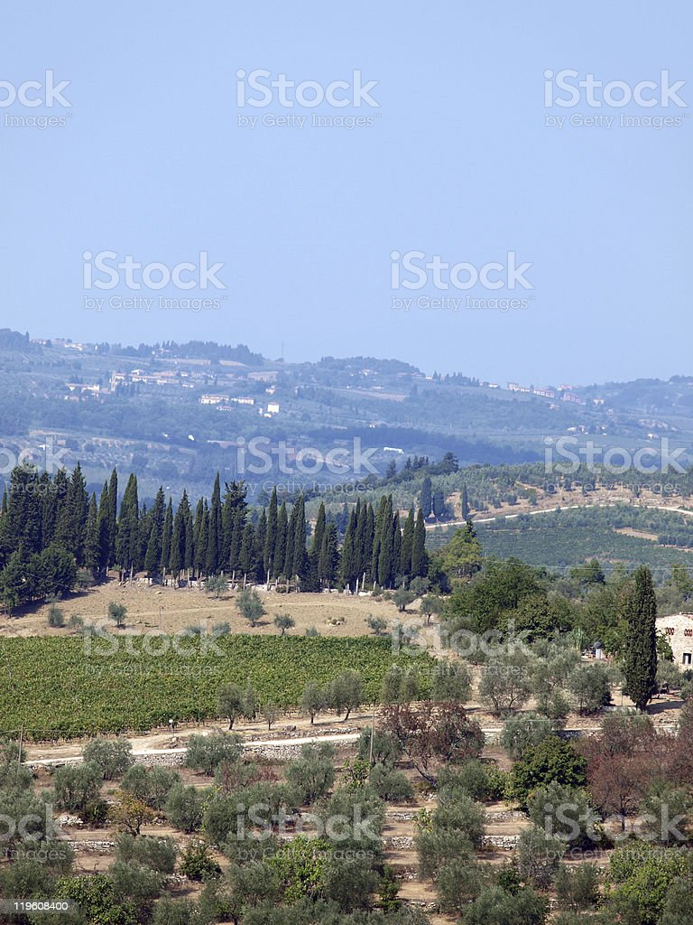 Vineyards and olive fields stock photo