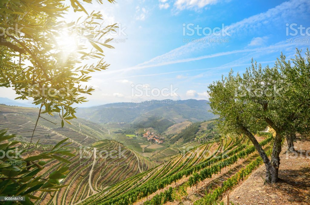 Weinbergen und Olivenhainen im Douro-Tal in der Nähe von Lamego, Portugal Europa – Foto
