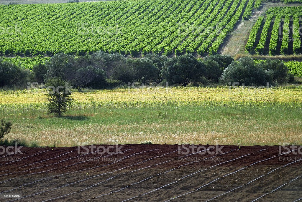 Vineyards and other cultures near Montpellier, France, at summer royalty-free stock photo