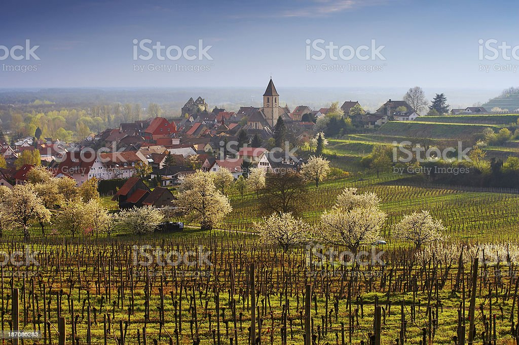 Vineyards and typical german village in spring stock photo