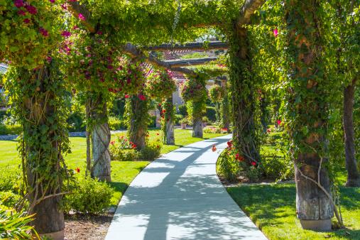 Garden area of vineyard in Temecula, California