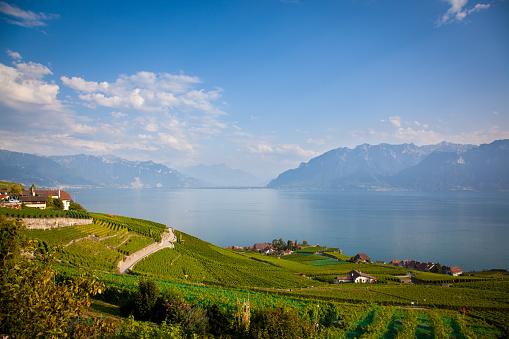 Vineyards Around Lake Leman
