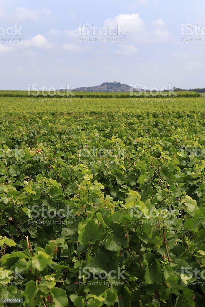 vineyards around the French city of Sancerre royalty-free stock photo
