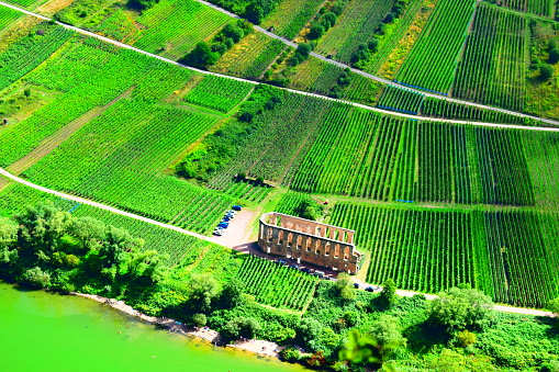 vineyards around the monastery ruin Stuben near Bremm in Mosel valley
