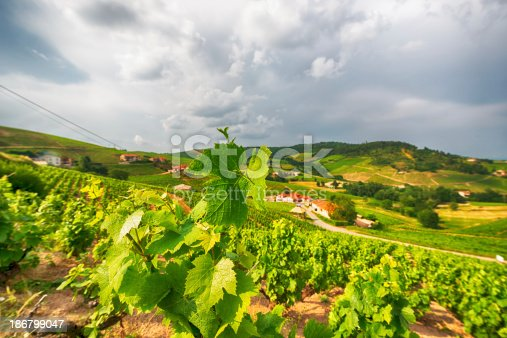 View at the vineyards of Beaujolais in France.