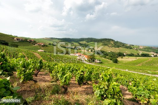 View at the typical vineyards of Beaujolais in France.