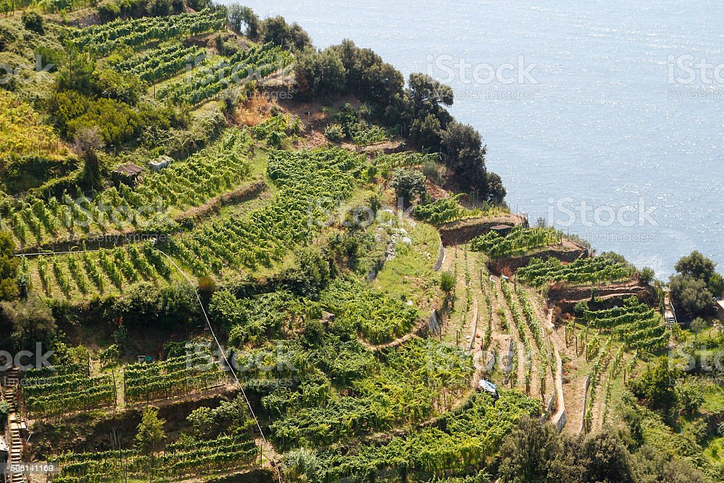 Vineyards at Italy stock photo