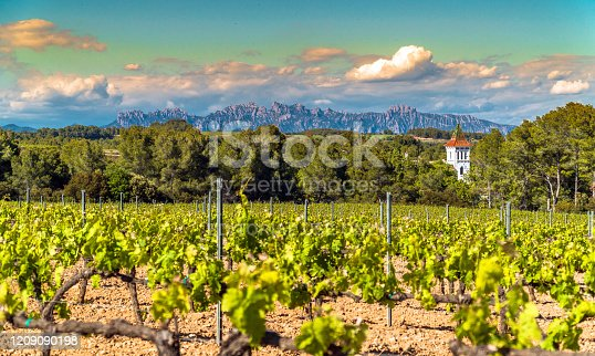 istock Vineyards at Penedes DO, Catalonia / Spain 1209090198