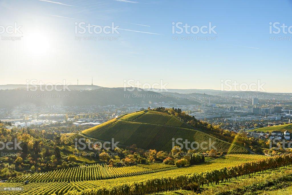Vineyards at Stuttgart - beautiful wine region stock photo