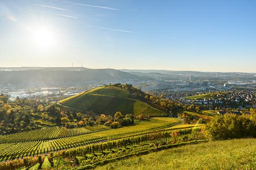 Vineyards at Stuttgart - beautiful wine region
