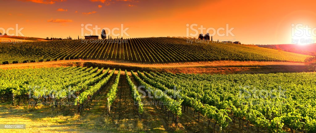Vineyards at Sunset near village of Le Sieci in Tuscany Region. Chianti, Italy. stock photo