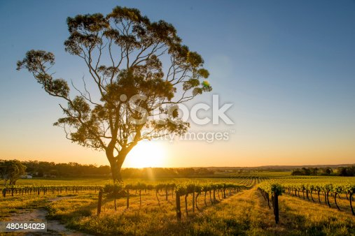 Vineyards Barossa Valley, Adelaide - AustraliaVineyards Barossa Valley, Adelaide - Australia