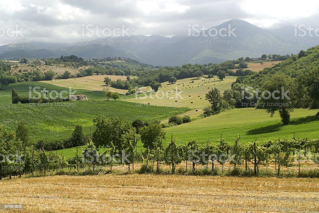 Vineyards between Rieti and Terni (Italy) royalty-free stock photo