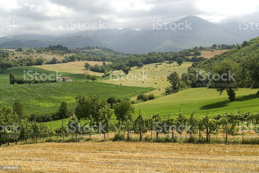 Vineyards between Rieti and Terni (Italy) stock photo