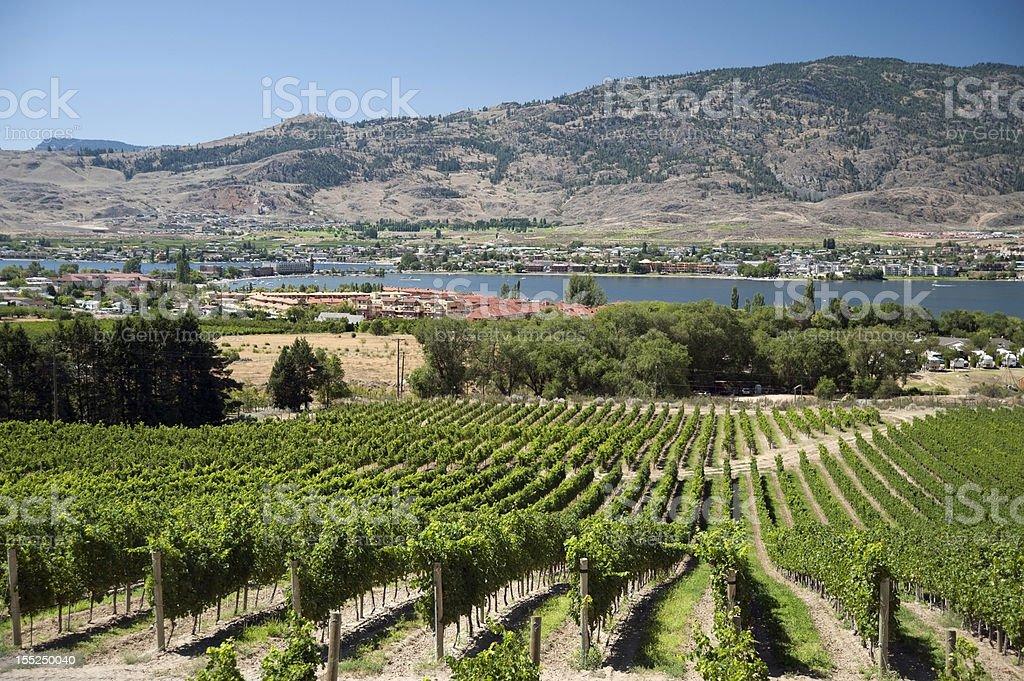 Vineyards by Osoyoos in Okanagan stock photo
