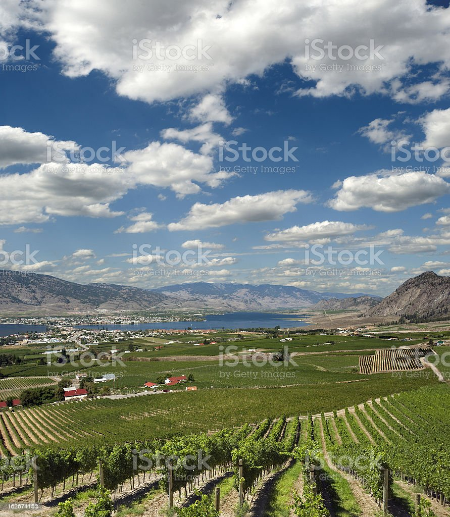 Vineyards by Osoyoos royalty-free stock photo