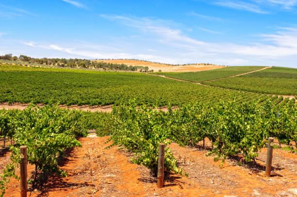 Vineyards - Clare Valley stock photo