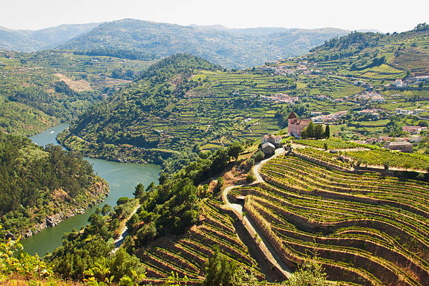vineyards ribeira do Douro Image captured from the road some kilometers to the west of Oporto, the image shows the river Douro and his vinyards. duero stock pictures, royalty-free photos & images