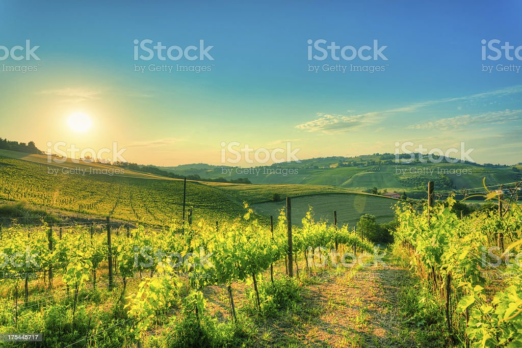 Vineyards Field at Sunrise in Tuscany, Chianti Region royalty-free stock photo