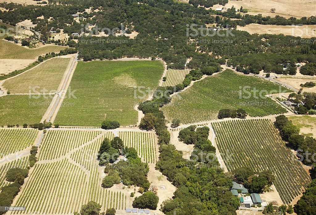 Vineyards from above royalty-free stock photo