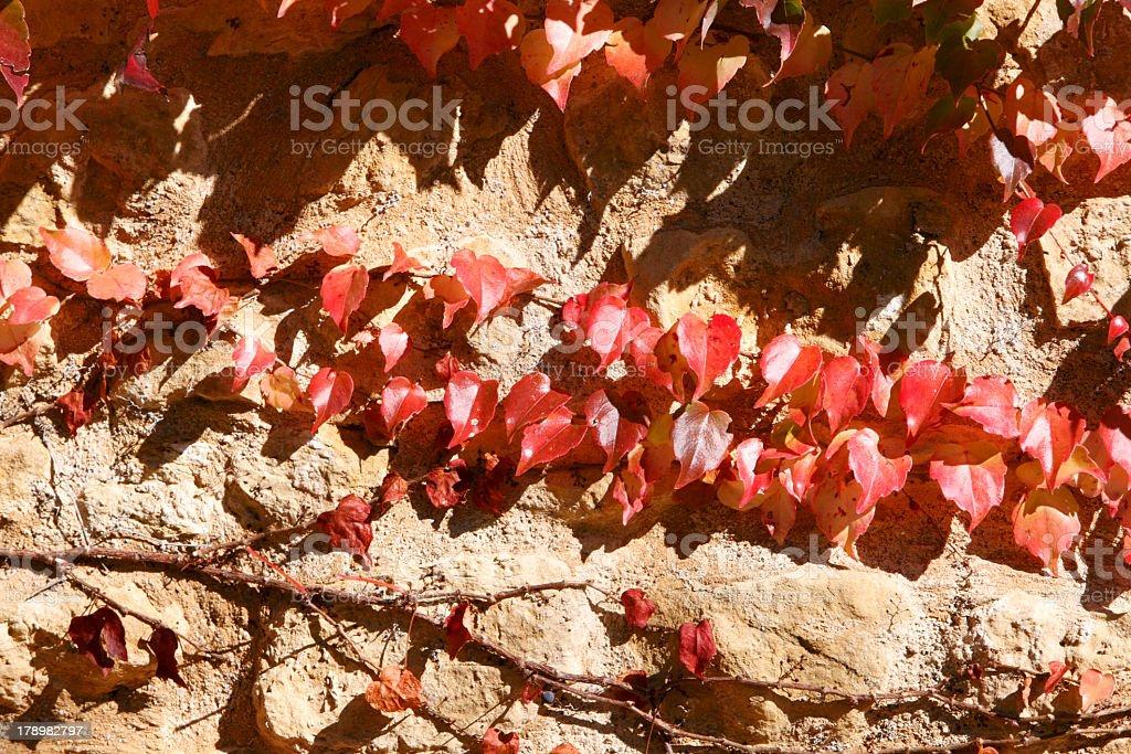 Vineyards in Alsace near Colmar stock photo