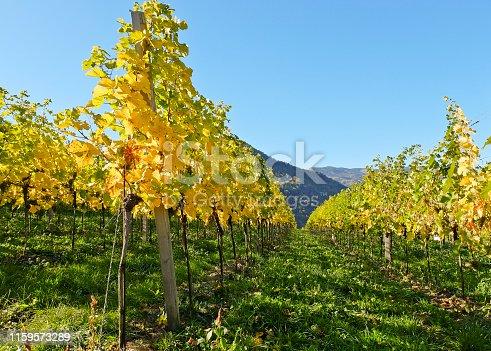 istock Vineyards in Austria (Spitzer Graben, Wachau) 1159573289
