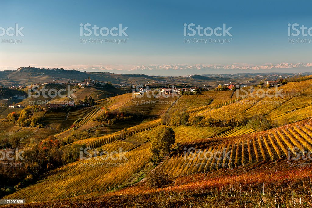 Vineyards in autumn, hills of the Langhe, mountains on background stock photo