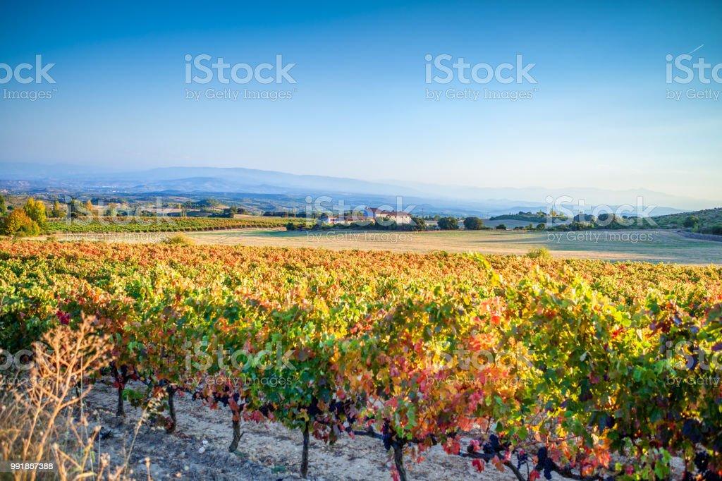 Weinberge im Herbst in Rioja. Spanien – Foto