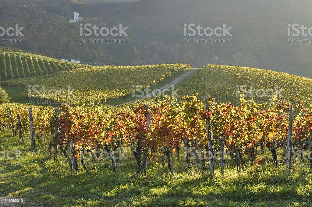 Vineyards in Autumn. Škalce, Slovenia stock photo