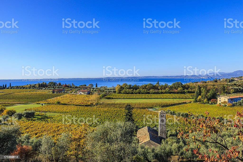 Vineyards in Autumn, Lake Garda, Italy stock photo