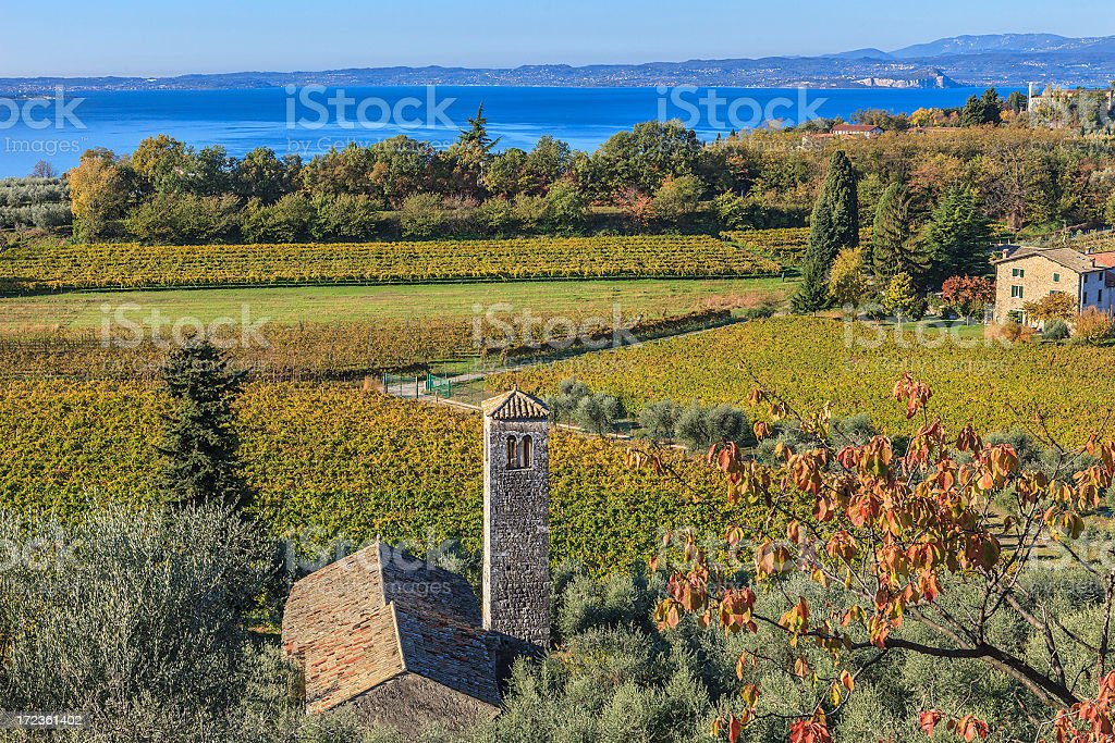 Vineyards in Autumn, Lake Garda, Italy stock photo