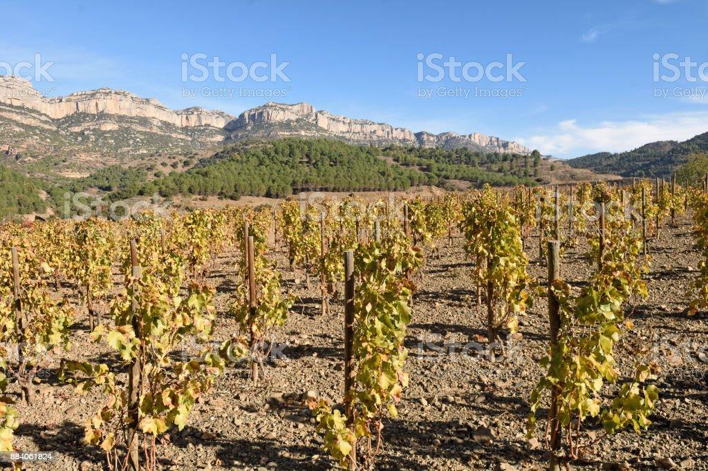 vineyards in autumn near the village of La Vilella Alta, in the background the mountain of Montsant, El Priorat, Tarragona, Spain (D.O Priorat) stock photo
