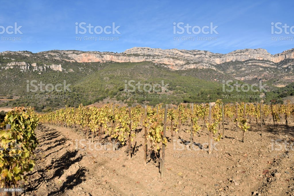 vineyards in autumn near the village of La Vilella Alta, in the background the mountain of Montsant, El Priorat, Tarragona, Spain stock photo
