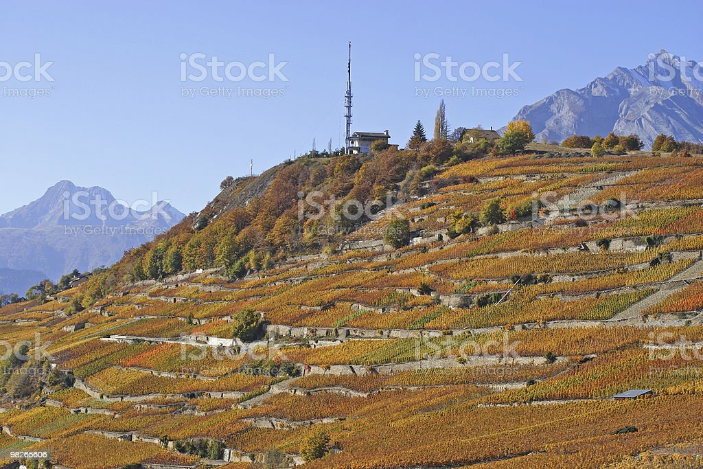 Weinberge im Herbst royalty-free stock photo