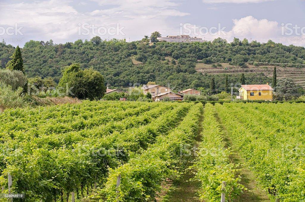 vineyards in bardolino stock photo