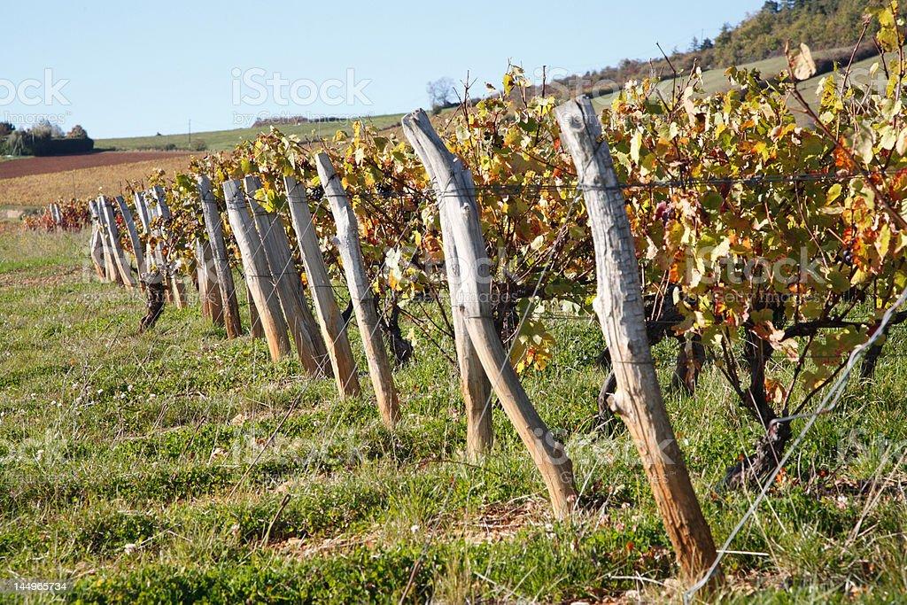 Vineyards in Beaujolais, near Theize stock photo