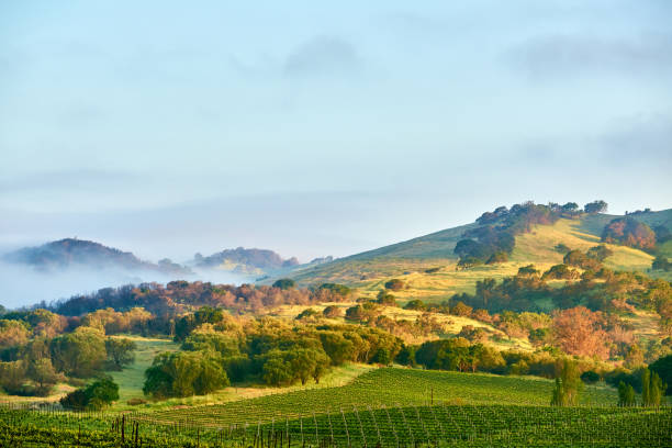Vineyards in California, USA Vineyards landscape in California, USA sonoma stock pictures, royalty-free photos & images