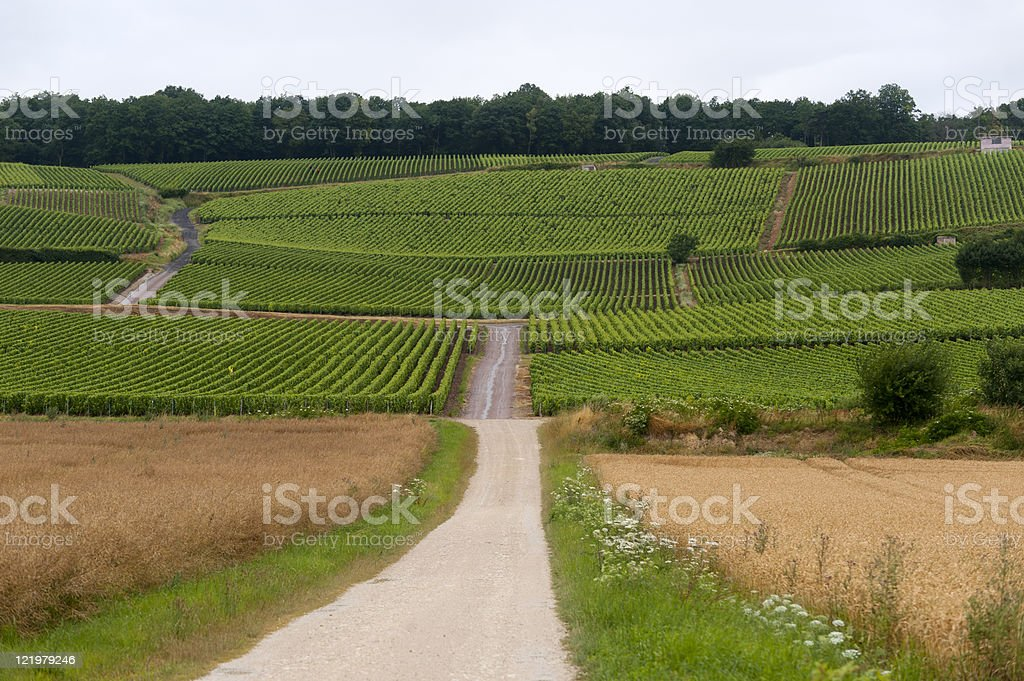 Vineyards in Champagne royalty-free stock photo