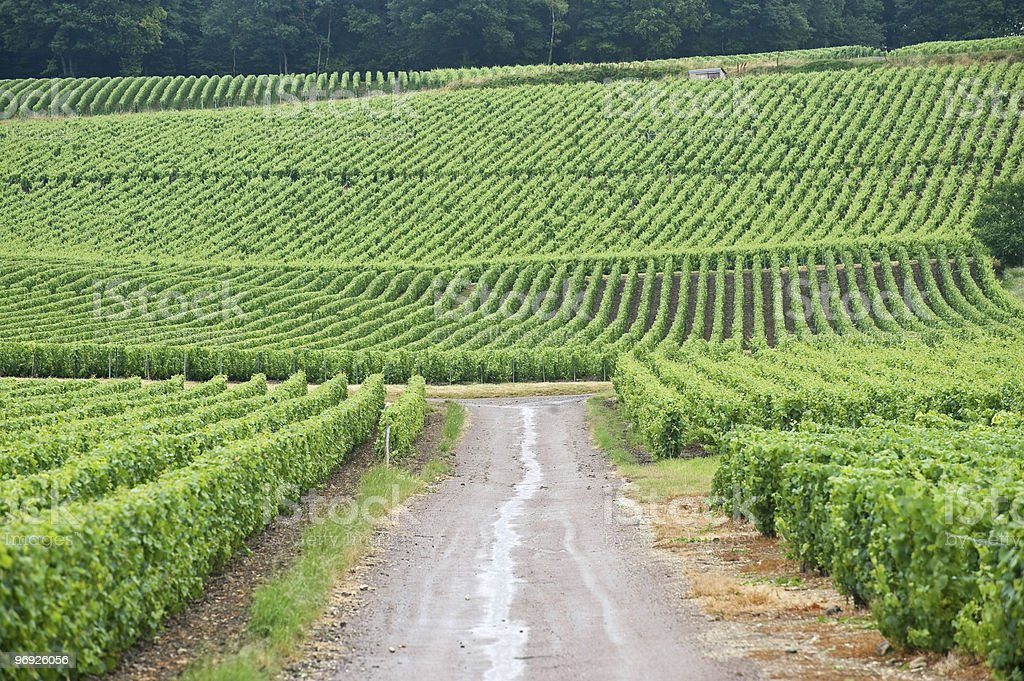Vineyards in Champagne (France) royalty-free stock photo