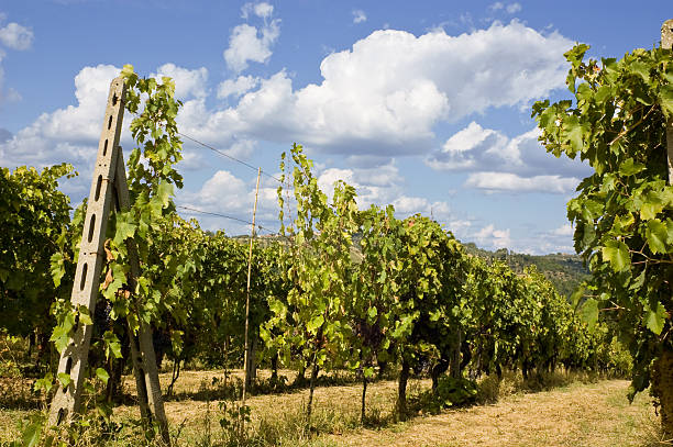 Vineyards in Chianti stock photo