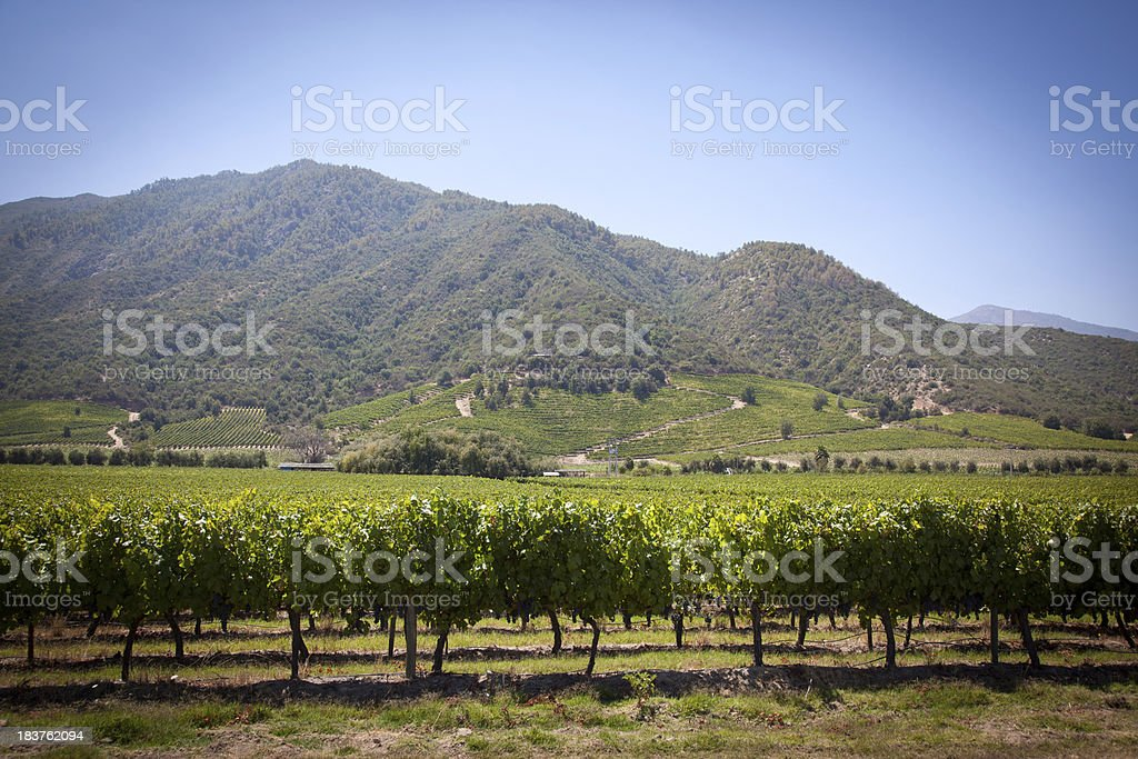Vineyards in Chile stock photo