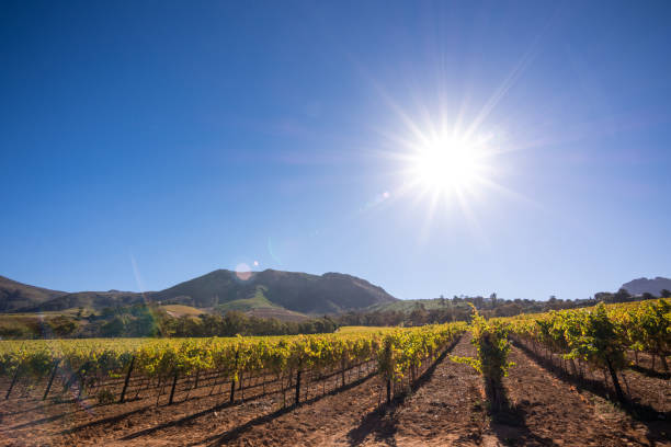 Vineyards in Constantia, Cape Town - South Africa stock photo